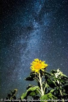 Curiosidades: Girasoles Nocturnos- Serie Noches en Soria.